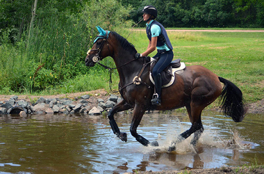 Competitive Team Support: Equestrian Team